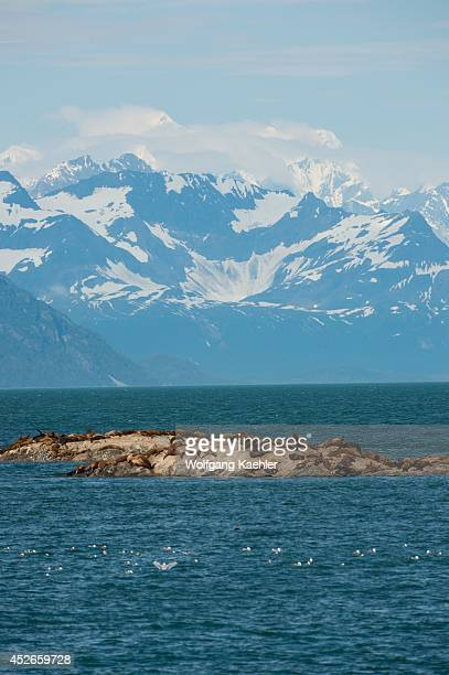 Steller sea lions resting on one of the Marble Islands with the Fairweather Mountain range in background Glacier Bay National Park Alaska USA