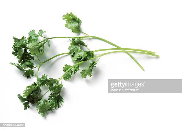 Stems of cilantro, full length