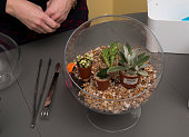Step 4 Michele Weymouth recommends laying out / arranging / planning your succulents / plants while making a doityourself terrarium in Ashburn VA on...