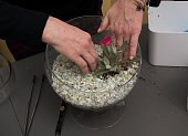 Step 7 Michele Weymouth plants the first largest plant while making a doityourself terrarium with pea gravel potting soil succulents and a splash of...