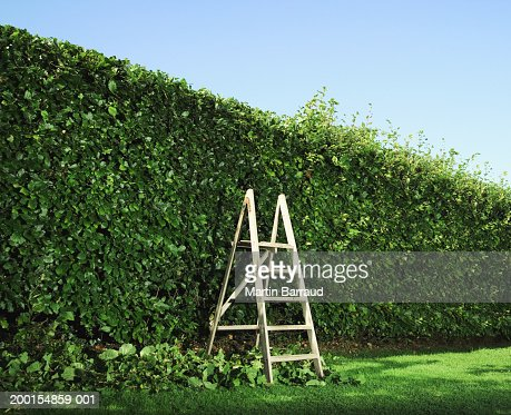 Step ladder by partially pruned hedge