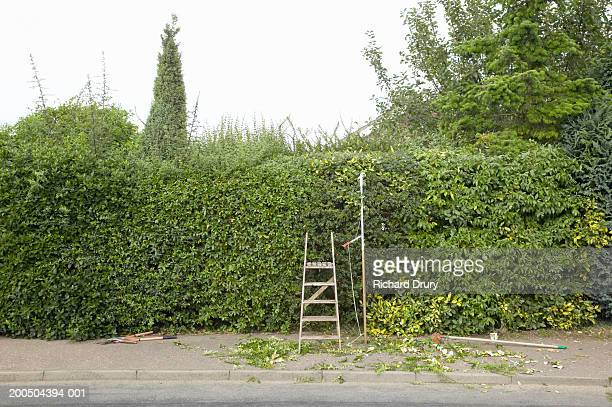Step ladder leaning on hedge