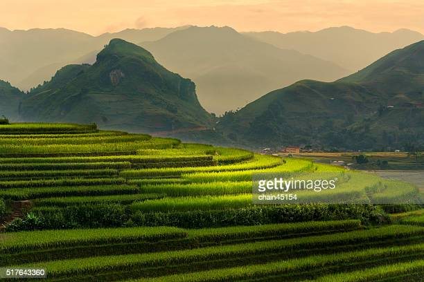 Step of rice paddy field in mountain at Vietnam, Asian
