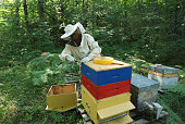 FRA: Living With Bees In The South Of France