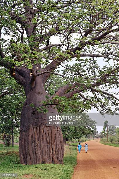 Stephanie van den Berg People walk down a road lined with Baobab trees also known as the 'tree of life' in Fandene on July 25 2008 In Senegal...