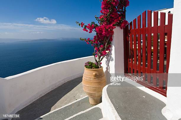 steps and Bougainvillea