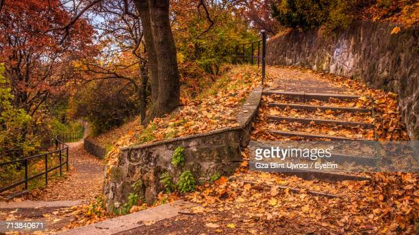 Steps By Trees During Autumn At Park