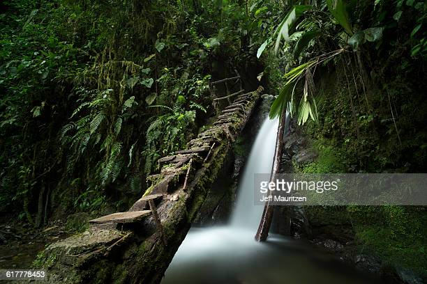 Steps lead up and over a small waterfall in the Mindo Nambillo Cloud Forest Reserve. Above it lies Cascada Reina an even larger waterfall.