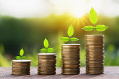 stept growing plant with money stack. finance accounting concept