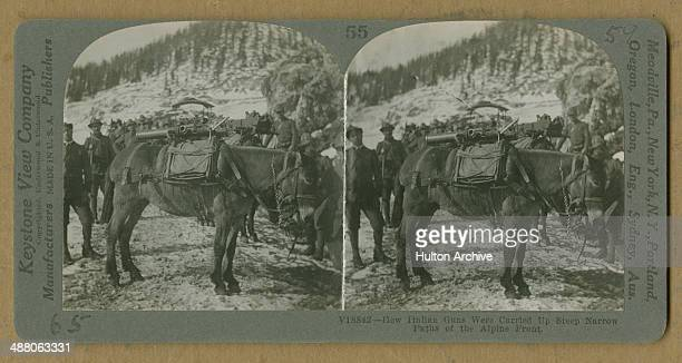 A stereoscopic image of Italian troops using mules to carry light cannon in the Alps during operations on the Italian Front in World War I circa 1916...