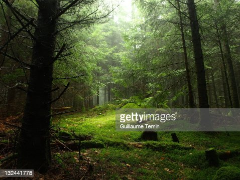 Sterious forest