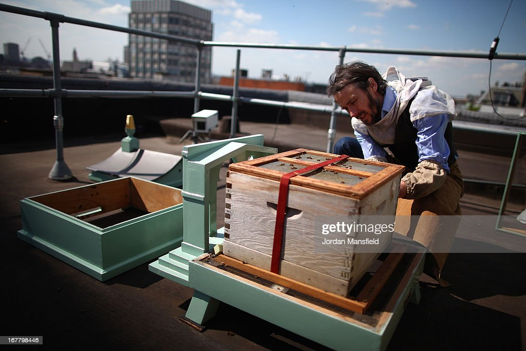 Steve Bendow from The London Honey Company tends to the beehives on the rooftop of Fortnum and Mason on April 30, 2013 in London, England. Fortnum and Mason have kept bees on their rooftop terrace for the last 7 years. At this time of year, the London Honey Company return the bees to their renovated hives.