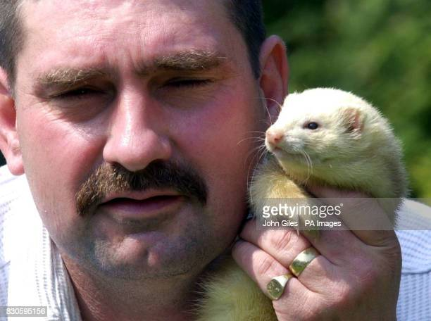 Steve Burley with his pet ferret Lucky at his Sheffield home Mr Burley devised an assault course and fitness regime for his ferrets who were starved...