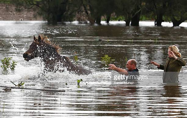 Steve Spowart and Sonia Sharrock try to help a horse stranded in barbed wire in flood waters on April 22 2015 near Dungog Australia Three people have...