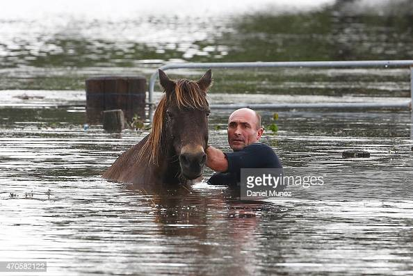 Steve Spowart tries to help a horse stranded in barbed wire in flood waters on April 22 2015 near Dungog Australia Three people have died and more...