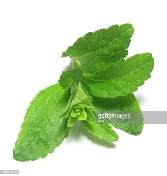 Stevia or Sweet Herb