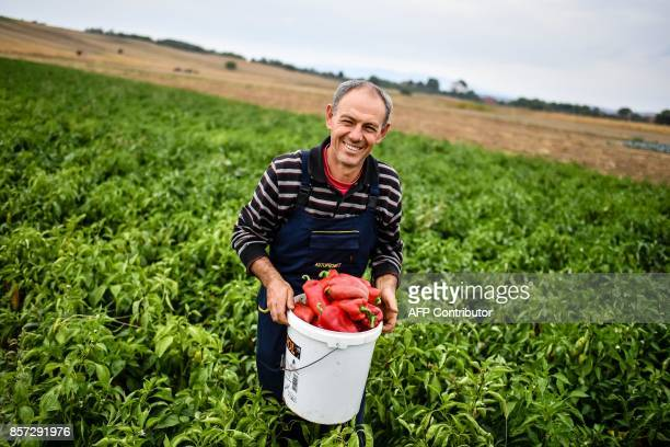 BRIEN Stevica Markovic holds a bucket full of his own grown peppers in Brestovac village near the south Serbian town of Leskovac on September 25 2017...