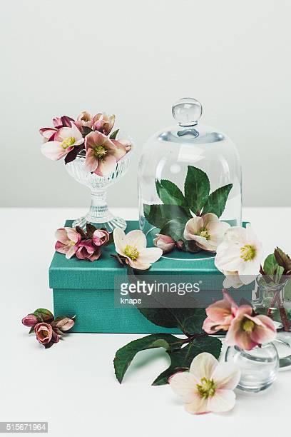 Stillleben Anordnung an Blumen und Vasen Frühling Rosa Hintergrund