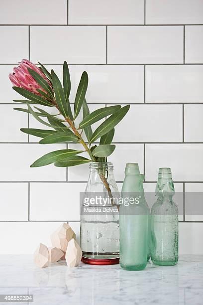 Still life - blue bottles and Protea flower