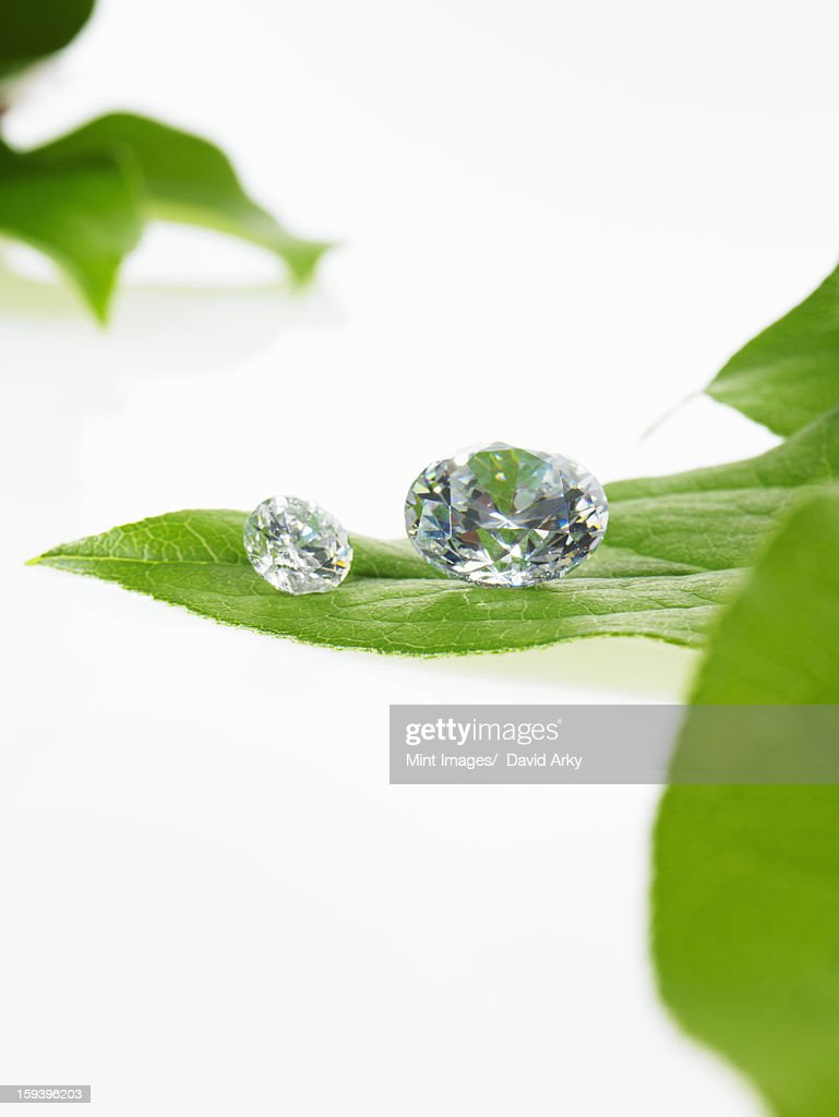 Still life. Green leaf foliage and decorations. A single leaf with veins, and small clear glass beads or objects, with facets which reflect light. : Stock Photo