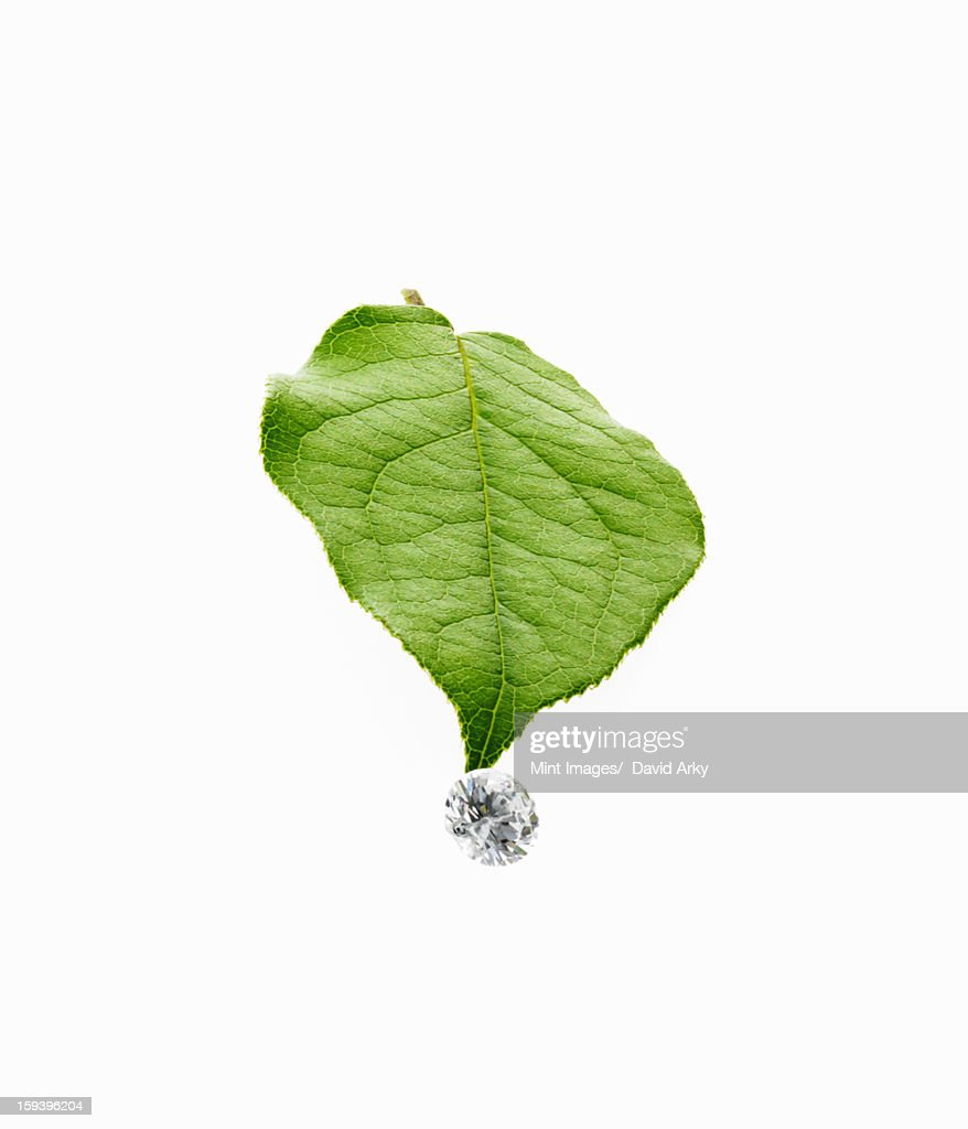 Still life. Green leaf foliage and decorations. A single leaf with veins, and a small clear glass bead or objects, with facets which reflect light. : Stock Photo