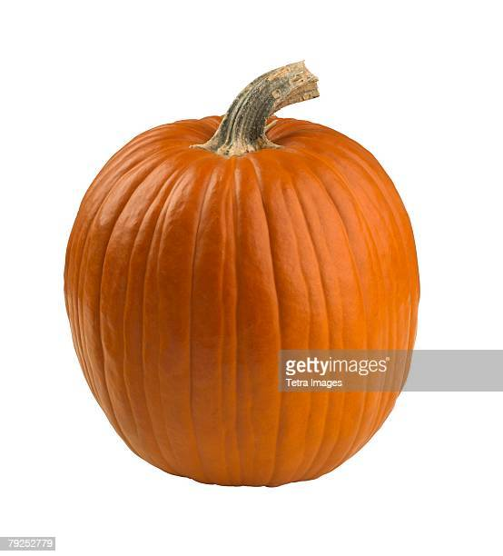 Still life of a pumpkin