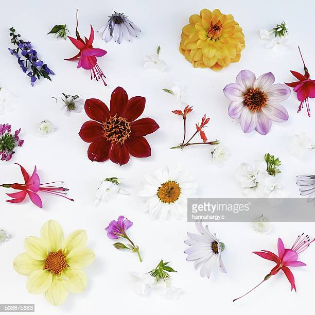 Still life of flowers on white table