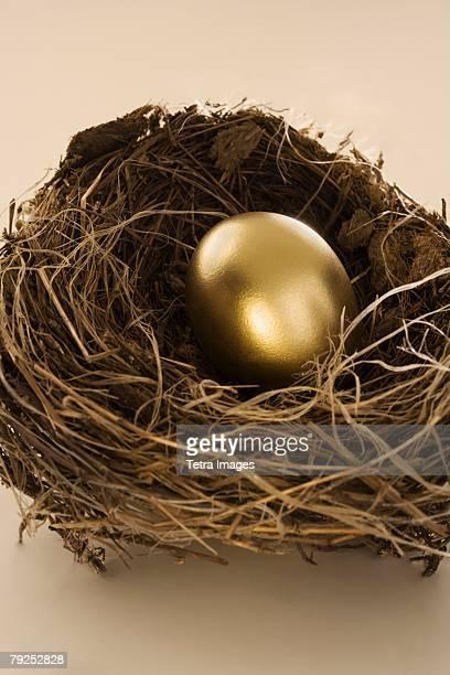 Still life of golden egg in nest