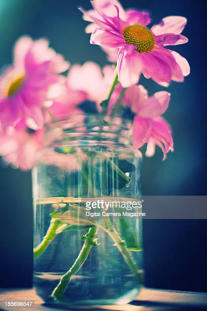 Still life of pink flowers in a jar of water taken on March 26 2012