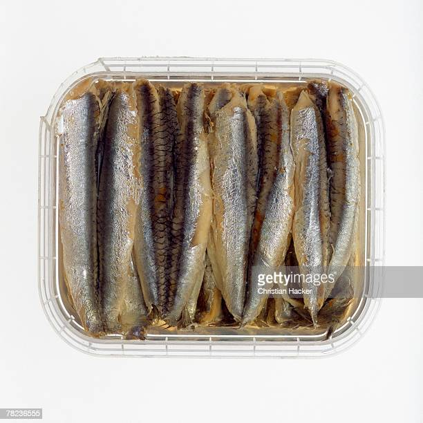 still life of sardines in can