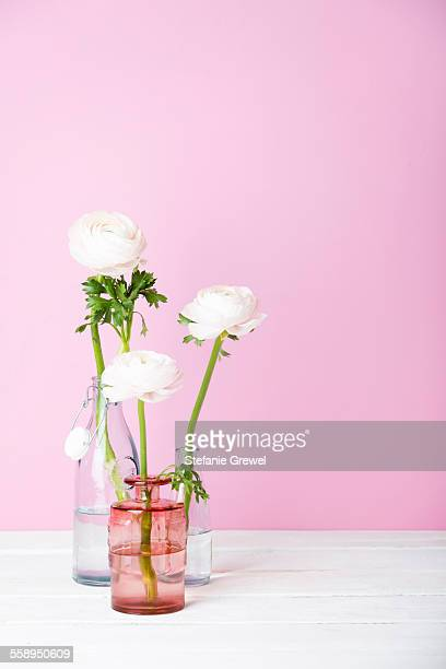Still life of three white cut flowers in three bottles