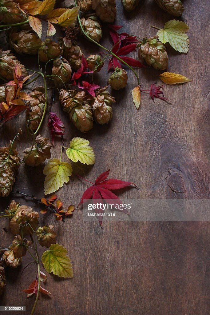 Still life with autumn leaves, hops, maple leaves : Foto de stock