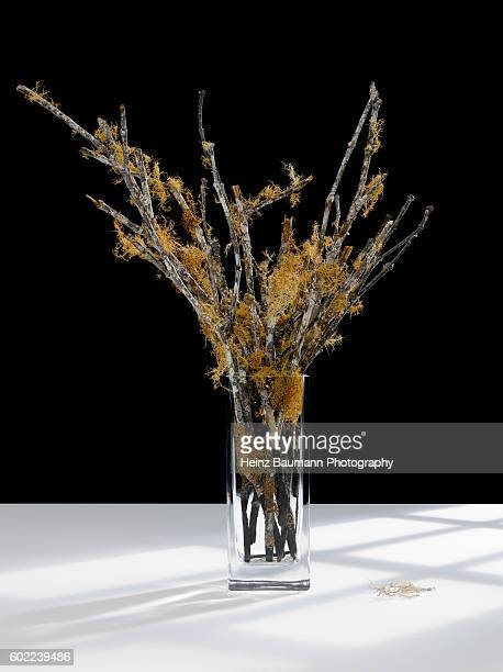 Still life with dried branches in a crystal vase