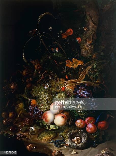 Still life with fruit flowers reptiles and insects by Rachel Ruysch Florence Palazzo Pitti Galleria Palatina