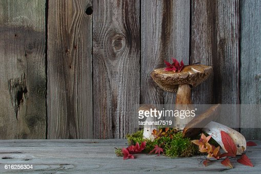 Still life with mushrooms, autumn leaves moss : Foto de stock