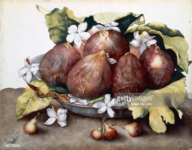 Still life with plate of figs jasmine and pear by Giovanna Garzoni miniature on parchment 24x34 cm Florence Palazzo Pitti Galleria Palatina