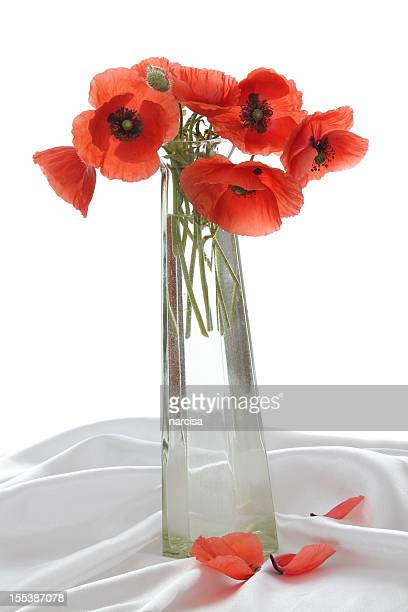 Still life with poppies and fallen petals