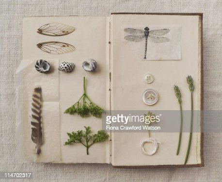 Still life with shells, feathers and book