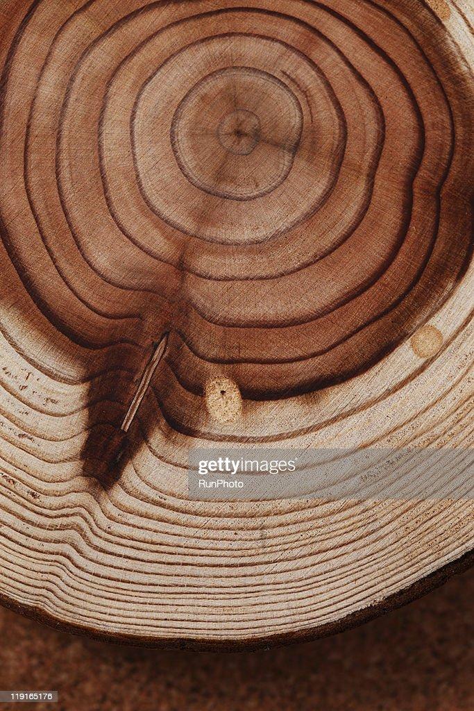 still life,stump,tree rings : Stock Photo