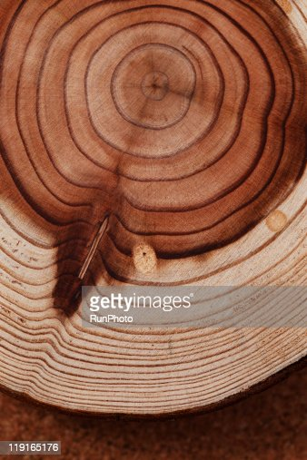 still life,stump,tree rings