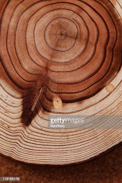 still life,stump,tree rings