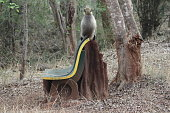 This gray langur was sitting on an old bench engulfed by an anthill in a dry forest during summer.