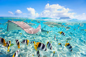 Colorful fish, stingray and black tipped sharks underwater in BoraBora lagoon