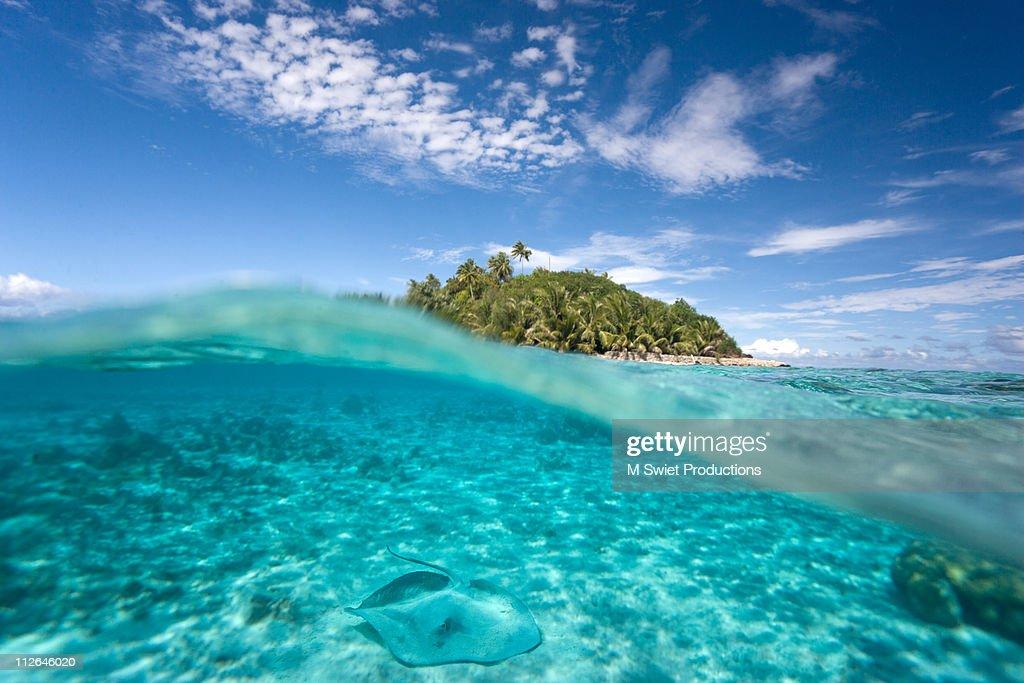 Stingray island split view