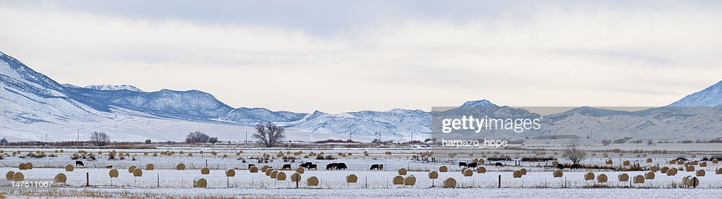 Stitched panorama of a snowy farm. : Stock Photo