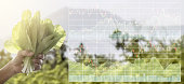 Stock market index information data on agriculture business.Farmer's hand hold organic green fresh lettuce vegetable for food in the organic farm.