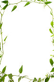 A stock photograph of an organic plants and leaves making a frame against a white background.