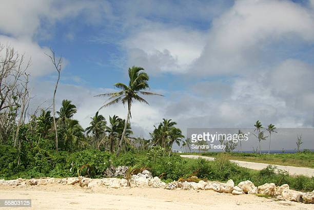 Stock Photography Coconut palms show some life next to bare tree branches in Alofi Niue October 30 ten months after the coastline was stripped from...