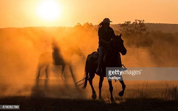 Stockman on horseback at daybreak Kununurra Kimberley region Western Australia Australia