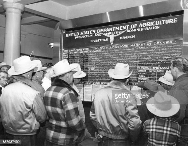 Stockmen comission men and buyers crowd around the bulletin board at the Denver Union Stockyards to watch history being made as larges shipments in...